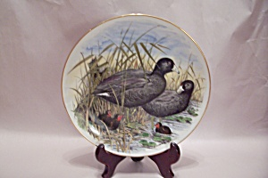 Game Birds Of The South American Coot Collector Plate