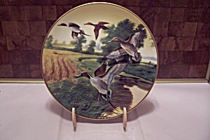 Pintails In Indian Summer Fine China Collector Plate