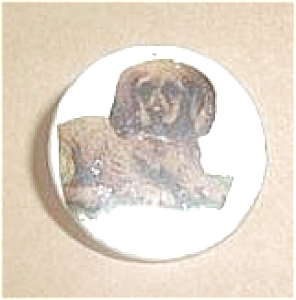 MOTHER OF PEARL PUPPY (Image1)