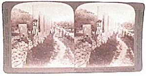 Palestine - Looking East stereo view (Image1)