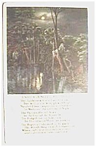 Jungle Life, Florida vintage post card (Image1)