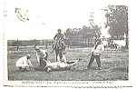 Click here to enlarge image and see more about item pc41: Buenos Aires Vida Campestre vintage postcard