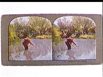 Click to view larger image of Hooked But Not Netted stereo view (Image1)