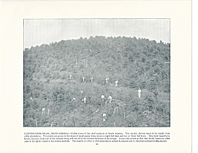 Coffee Farm, Brazil, 1892 Shepp's Photographs Original Book Page