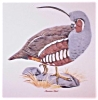 Click to view larger image of Sterling China Mountain Quail Bird Plate, Arthur Singer & Carl Otto (Image2)