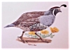 Click to view larger image of Sterling China California Quail Bird Plate, Arthur Singer & Carl Otto (Image2)