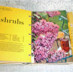 Click to view larger image of Better Homes and Gardens New Garden Book Ring Bound (Image4)