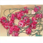 Click to view larger image of Box PINK GE Merry Midget Tinsel Flower Christmas Lights (Image2)