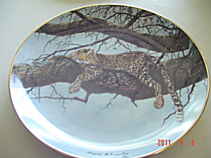 Hamilton View From Above Big Cats Collector Plate