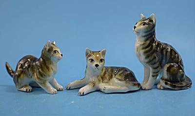 Japan Tabby Cat Trio  (Image1)