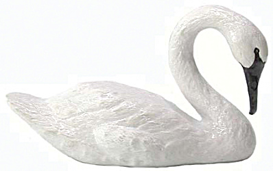 R070 Swimming Trumpeter Swan (Image1)