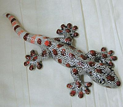 K8721 Gecko Lizard (Image1)