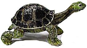 R094 Galapagos Tortoise (Image1)