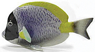 R143r Purple Tang Fish (Image1)