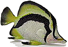 R141 Butterfly Fish (Image1)