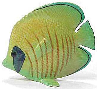 R139 Masked Angel Fish (Image1)