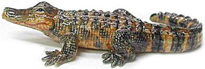 R234 American Alligator (Image1)