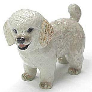 R161r Toy Poodle (Image1)