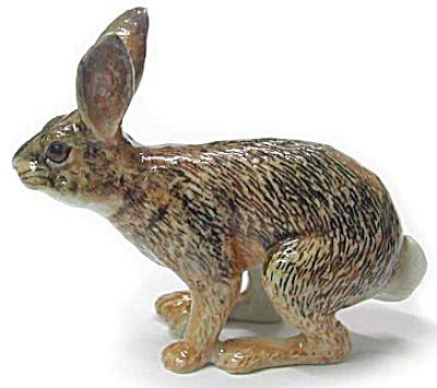 R106 Cottontail Rabbit (Image1)