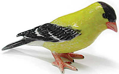 R184 American Goldfinch