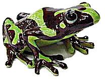R166 Poison Dart Frog (Image1)