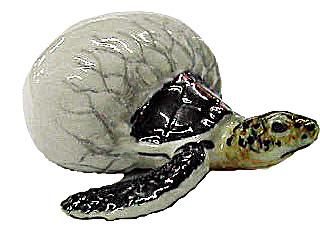 R075r Black Sea Turtle Hatching (Image1)