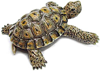 R175 Desert Tortoise (Image1)