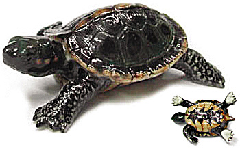 R171cr Baby Brown Turtle