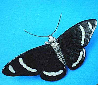 K891 Black Moth (Image1)