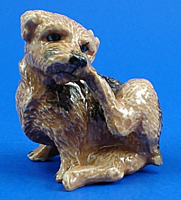 K1381 Scratching Norfolk Terrier