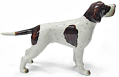 R264c Liver And White English Pointer