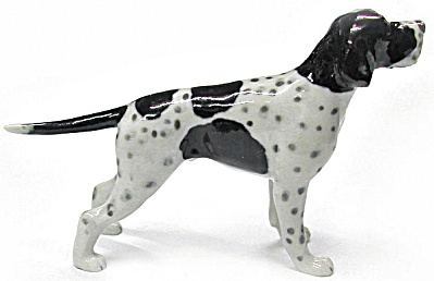 R264b Black And White English Pointer