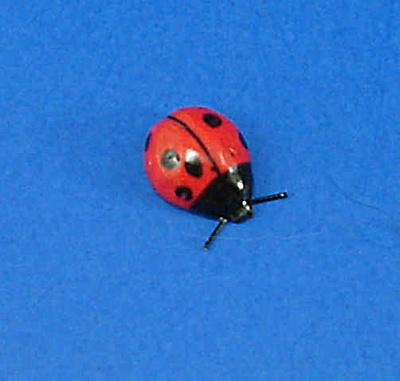 K4371 Tiny Ladybug (Image1)