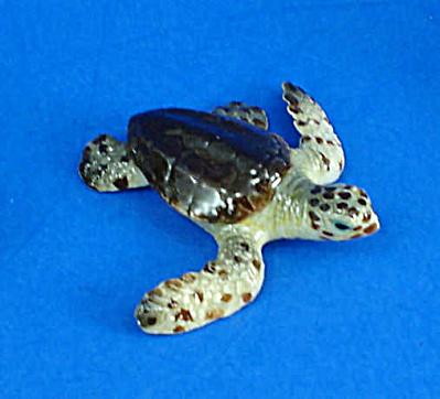 K9781 Baby Hawksbill Sea Turtle (Image1)
