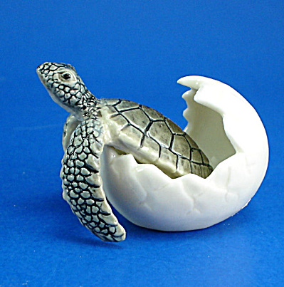 K9461 Hatching Sea Turtle (Image1)