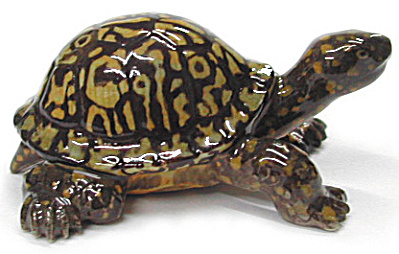 R349r Eastern Box Turtle