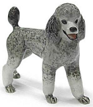 R294r Standard Poodle (Image1)