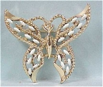 Click here to enlarge image and see more about item j00173: Lovely Butterfly Pin / Pendant