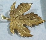 Click here to enlarge image and see more about item j00635: Giovanni Gold Tone Maple Leaf Pin