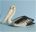 K6681b Swimming Pelican