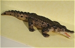 Click here to enlarge image and see more about item n00430: K3903 Miniature Crocodile 5 inch