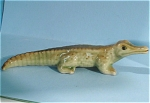 Click here to enlarge image and see more about item n00431: E3561a Baby Crocodile