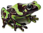 Click here to enlarge image and see more about item n00721: R166 Poison Dart Frog