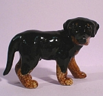 Click here to enlarge image and see more about item n00801: K9842 Beauceron Standing Puppy