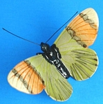 K892 Green/Orange Moth