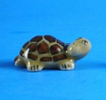 Click here to enlarge image and see more about item n01041: X015 Tiny Baby Tortoise