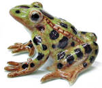 Click here to enlarge image and see more about item n01337: R130C Leopard Frog