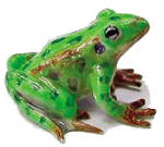 Click here to enlarge image and see more about item n01338: R130Ar Leopard Frog