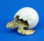 Click here to enlarge image and see more about item n01398: R321f Hatching Sea Turtle