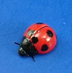 K999 Tiny Ladybug